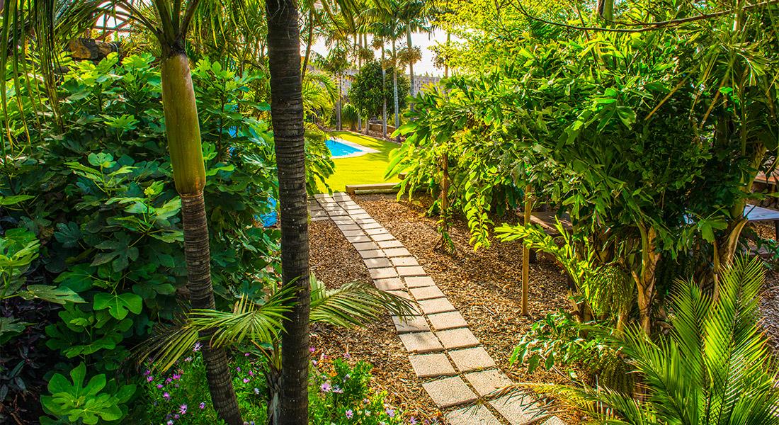 Camino de baldosas rodeadas de vegetación en un jardin de una finca privada
