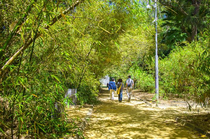 Tres personas paseando bajo la sombra de un unos bambus por el Parque Garcia Sanabria de Santa Cruz de Tenerife