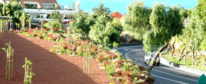 uso de arbustos en jardinería pública de Tenerife