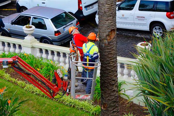 Trabajadores de Interjardín en la Orotava, aplicando la Norma Granada, método de valoración monetaria de árboles, palmeras y arbustos