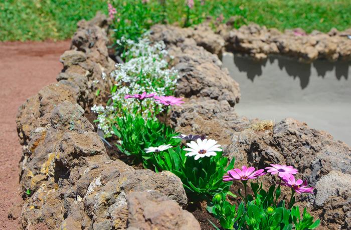 Gerberas plantadas por interjardin en un jardin de La Orotava