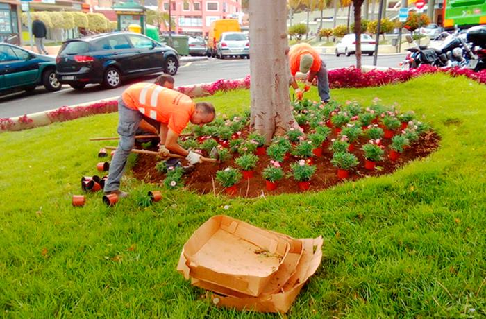 Trabajadores de interjardin plantando flores en rotonda de La Orotava